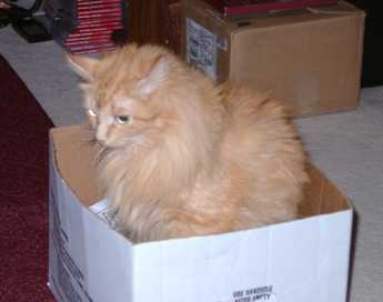 [Picture of Nacho sitting in box]