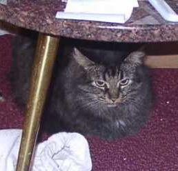 [Picture of Suki under table]